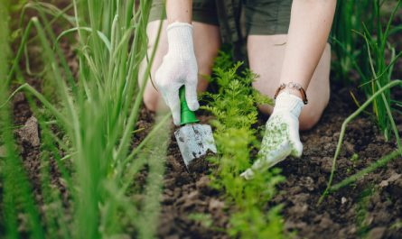 przydomowy ogrod warzywny