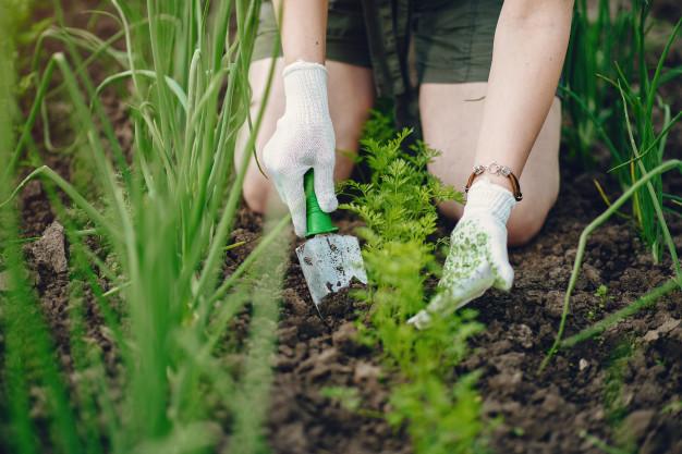 Jak założyć ogródek warzywny? Krok po kroku