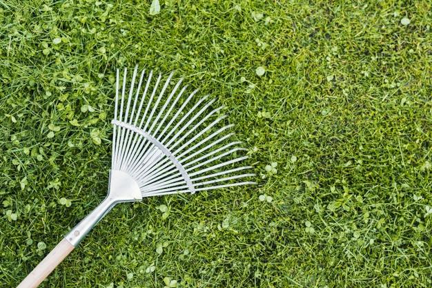 Wertykulacja trawnika – kiedy, jak i czym? Kompendium wiedzy