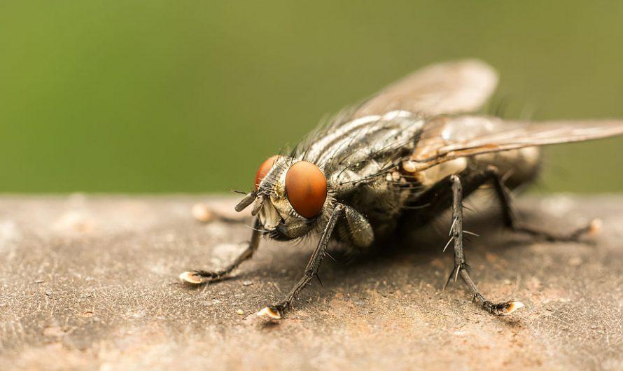 Sposoby na muchy – jak pozbyć się much z domu? 7 sposobów