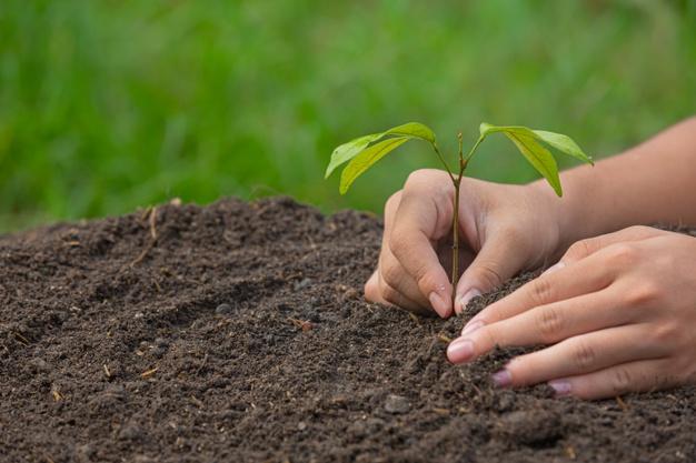sadzenie drzew owocowych