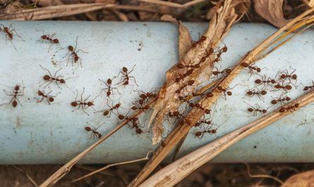 mrowki przy domu