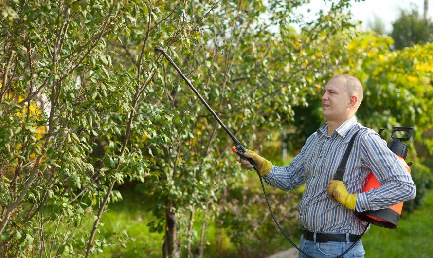 Opryski drzew owocowych – kiedy, czym i jak to robić?